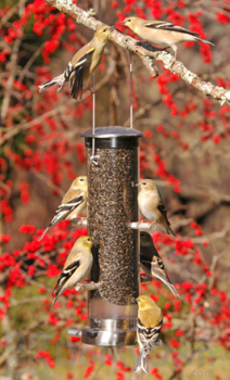 Aspects Thistle Tube Brushed Nickel Quick Clean Base Bird Seed Feeder (399)