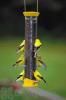 Droll Yankees Metal Thistle Bird Feeder Yellow(CJTHM15Y)