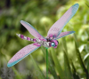 Exhart Windy Wings Dragonfly Garden Stake Assorted (50205)