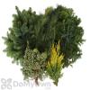 Fernhill 10 Pound Assorted Evergreens Decorating Kit
