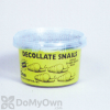 Orcon Decollate Snails (100 live adults) (DS-C100)