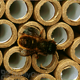 Orcon Replacement Tubes For Mason Bee Nest (35 tubes) (MB-RRT35)