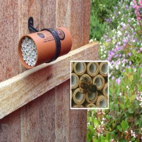Orcon Mason Bee Nest