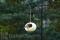 PineBush Country Cream Ceramic Bird Feeder 6 in. (PINE30200)