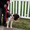 Soft Lines 2 Handled Sidewalk Safety Dog Snap Leash 3 / 8\