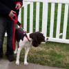 Soft Lines 2 Handled Sidewalk Safety Dog Snap Leash 5 / 8