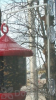 Songbird Essentials Window Suction Cup Hanger (SE077)