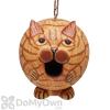 Songbird Essentials Orange Tabby Cat Gord - O Bird House (SE3880204)