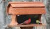 Songbird Essentials Post Mounted Barn Bird Feeder (SE556)