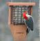Songbird Essentials Suet Feeder with Tail Prop (SE566)
