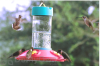 Songbird Essentials Original Dr. JBs Clean Hummingbird Feeder 16 oz. (SE6006)