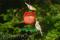 Songbird Essentials Apple Goldfinch Feeder (SEBCO321)