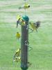 Songbird Essentials Green Spiral Finch Tube Feeder 17 in. (SEBQSBF2G)