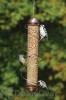 Songbird Essentials Copper Peanut Feeder 17 in. (SEBQSBF4C)