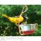 Songbird Essentials Single Jelly Cup Bird Feeder 6 oz. (SEHHJLSC)