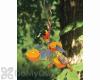 Songbird Essentials Copper Triple Fruit Oriole Feeder with Ivy (SEHHORTF)