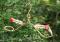 Songbird Essentials Tweeter Totter Hummingbird Feeder (SEHHTETR)