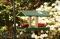 Songbird Essentials Fruit and Jelly Bird Feeder with Green Dish (SERUBDFR100)