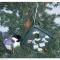 Songbird Essentials Bird House Kit (SERUBEKKBH)