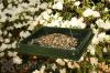 Songbird Essentials Hanging Platform Bird Feeder (SERUBLHPF105)
