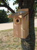 Songbird Essentials Ultimate Bluebird House (SESCS3004RW)