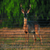 Tenax Deer Fence C Flex Select 6' x 330'