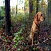 Tenax Pet Fence Select 4' x 330'