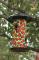 Toland Home and Garden Lady Bugs Bird Feeder 3 lb. (202046)